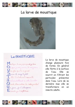 Blog science du coll ge etouvie th me dotclear 2 - Frederic le moustique ...